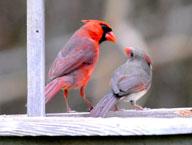 CardinalsTalking